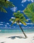 Fototapeta Krajobraz 184x254 4-883 Atol Ari Malediwy Morze Plaża Palma Krajobraz Widok Wakacje Przyroda