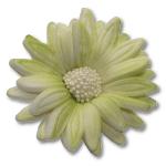 HOKUS - Margaretka 10 szt.  pistacjowa