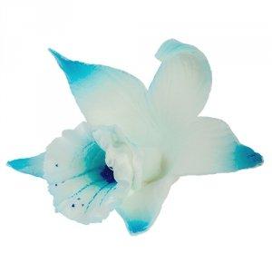 Katleja niebieska malowana - 10 szt