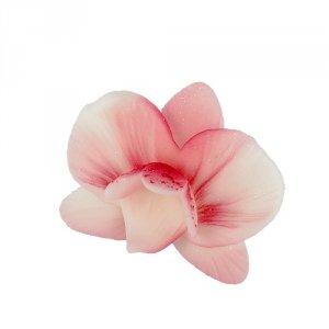 Cymbidium 18szt. różowe