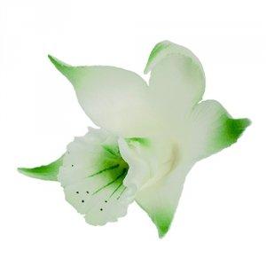 Katleja pistacjowa malowana - 10 szt