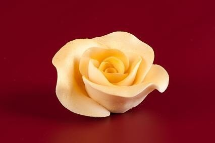Róża Max 6 szt. złota