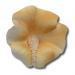 HOKUS - Hibiskus Herbaciany 20 szt.