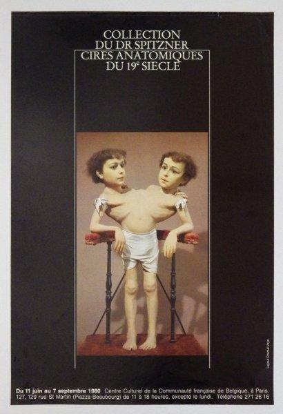 Collection du Dr Spitzner: Cires Anatomiquesdu 19e siecle