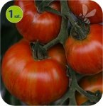Pomidor szczepiony Tirouge