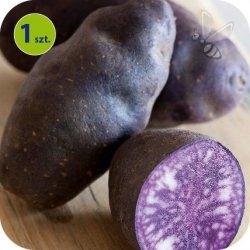 Ziemniak Eco Vitelotte Noir 1 sztuka
