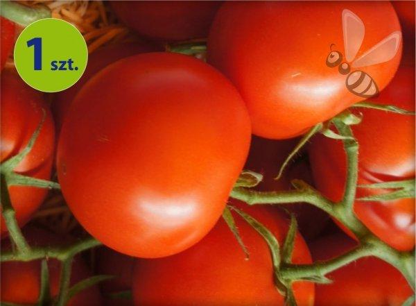 Pomidor Phantasia F1