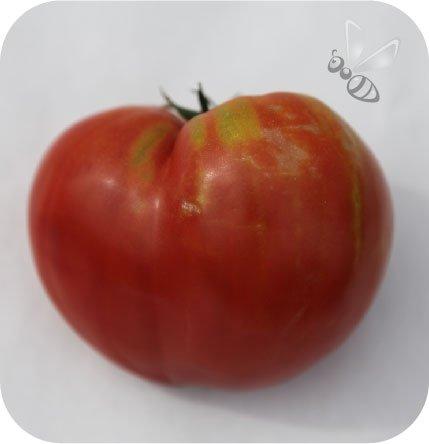 Pomidor szczepiony Gormandia bawole serce
