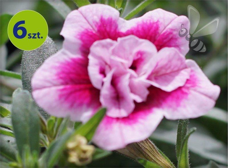 calita pełna biało-różowa allegro