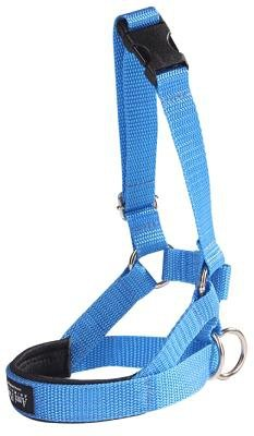 Amiplay Halter S N2 Foxterrier niebieski