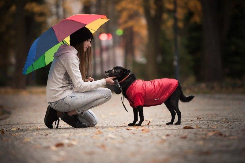 ANIMAL DESIGN Kurtka dla psa Czarno-Czerwona 26cm