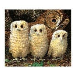 Karnet kwadrat z kopertą Owl Babies