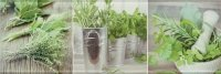 Salerno glass kitchen 1 inserto 20x60