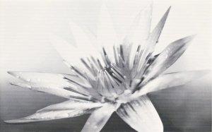 Negra White Inserto Flower 25x40
