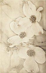 CERSANIT tuti beige inserto flower 25x40