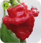 Papryka chili karaibskie Animo
