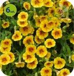 Calita (Million bells) żółty z oczkiem 6 sztuk