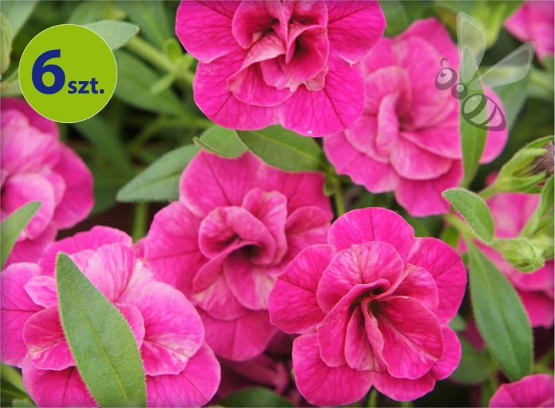 calita pełna różowa allegro