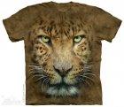 Big Face Leopard - Gepard - The Mountain