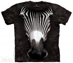 Big Face Grevy's Zebra - The Mountain