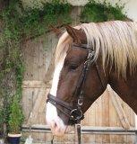 Ogłowie na konie zimnokrwiste - KERBL