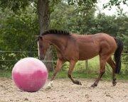Piłka dla konia 100 cm - QHP