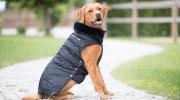 Derka dla psa nylonowa Eskadron PLATINUM EDITION 2018/19  - black