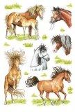 Naklejki z rysunkami koni - Herma
