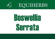 Boswellia Seratta - Kadzidłowiec 0,5 kg - EQUIHERBS
