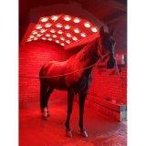 Solarium ALU-SOLAR - BM Horse