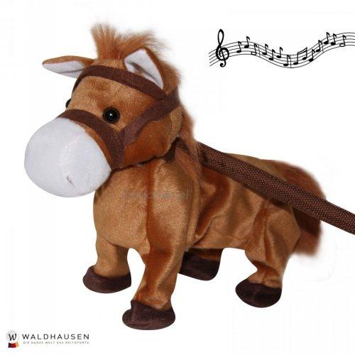 Tańczący koń ELVIS - WALDHAUSEN