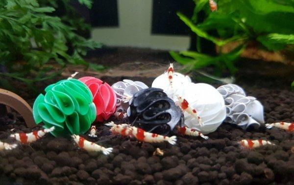 Baby Shrimp Shelters Biały 20 szt