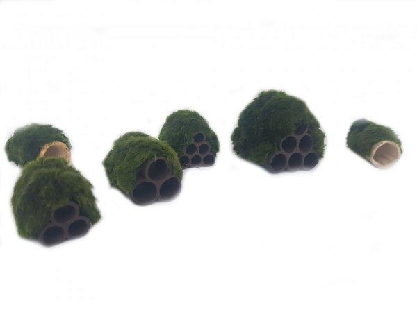 Gałęzatka Na Rurkobloczku Mini 6-Rurek 55x45x45mm Naturalna Ozdoba