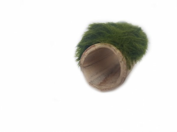 Gałęzatka Na Rurce A 50x15mm Naturalna Ozdoba