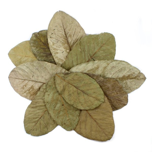 Tantora Guava Leaves Liście Guawy 10Szt.