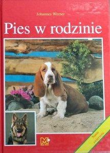 Johannes Werner • Pies w rodzinie