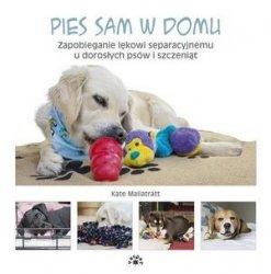 Pies sam w domu Zapobieganie lękowi separacyjnemu u dorosłych psów i szczeniąt