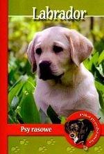 Labrador Psy Rasowe