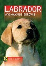 Labrador Wychowanie i zdrowie
