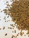 Gorczyca sarepska 1kg