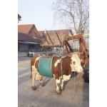 Przyrząd do podnoszenia krów DAISY LIFTER