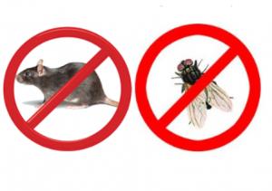 Zwalczanie gryzoni i owadów