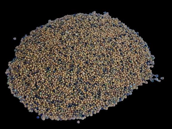 Gorczyca poplonowa, miododajna odmiana Sarepska 1kg