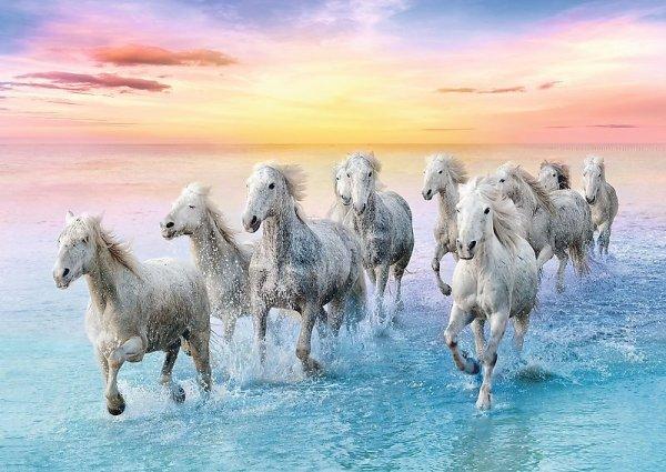 TREFL Puzzle 500 el. Białe konie w galopie (37289)
