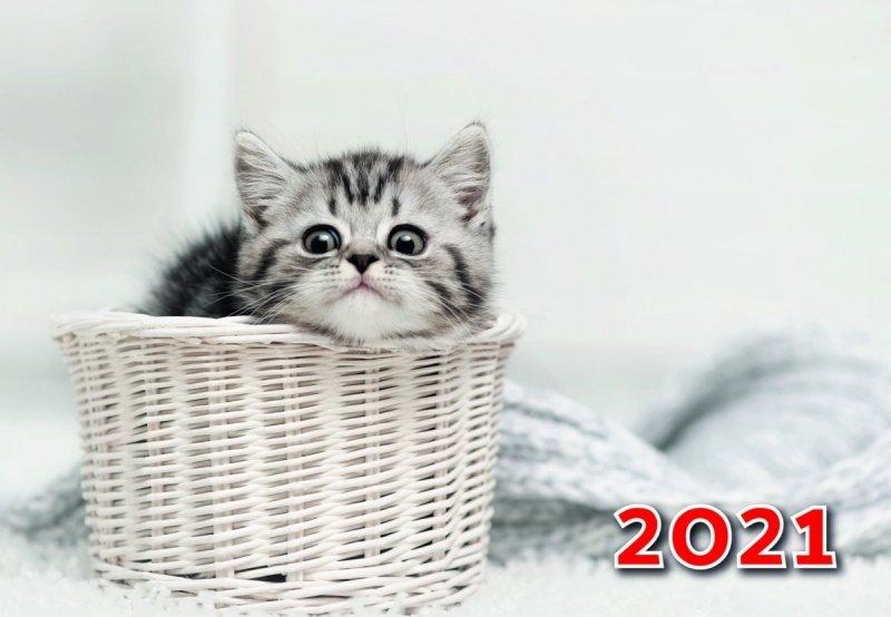 Kalendarz trójdzielny z kotem