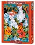 Castor 1500 elementów Papugi