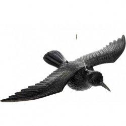 Kruk lecący