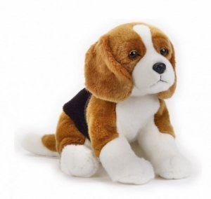 Dante Pluszak Pies Beagle National Geographic