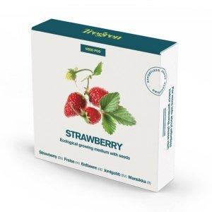 Tregren Strawberry, 1 seed pod, SEEDPOD95