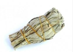 Biała szałwia - pęczek - waga 10-14 gram